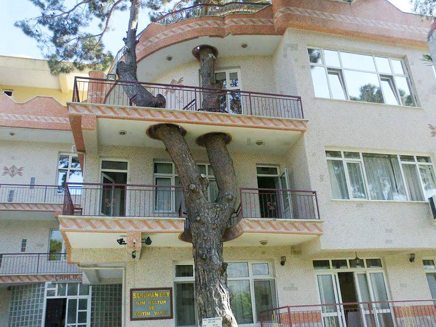 agaclar-kesilmesin-turkiye