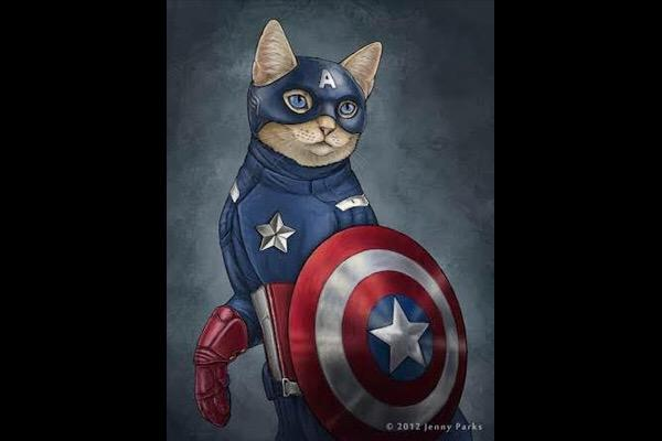 captain-america-cat