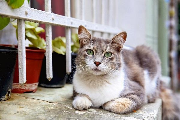 cihangir-kedi-olmak