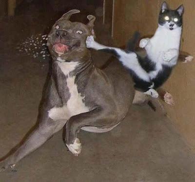 disari-biraktiginiz-kediniz-XY-listelist