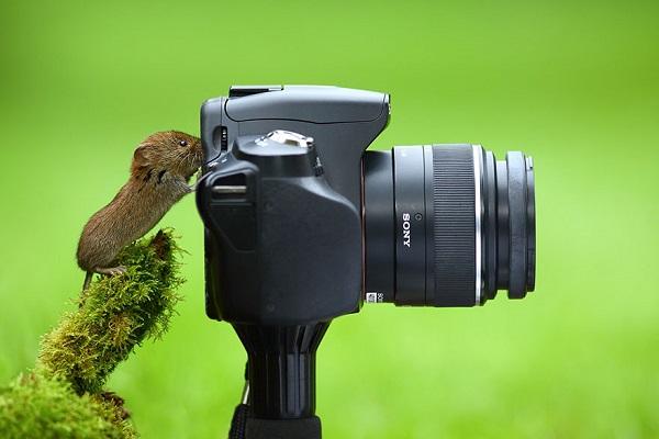 fare-fotografi-listelist