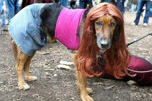 human-female-dog