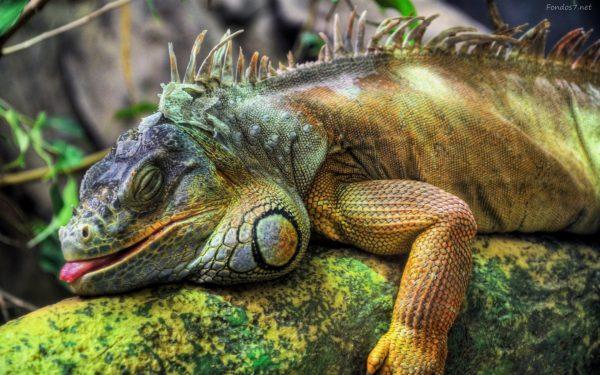 iguana-listelist