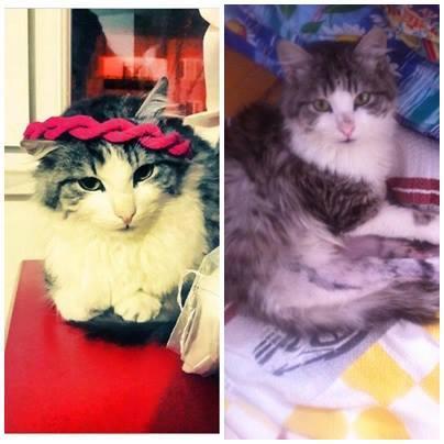 iris-kedi