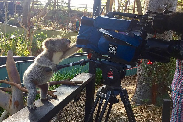 koala-fotografi-listelist