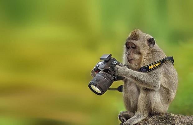 maymunlar-fotograf-listelist