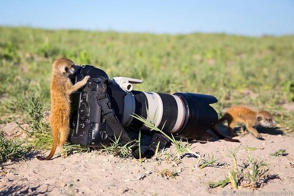 mirket-fotografi-listelist