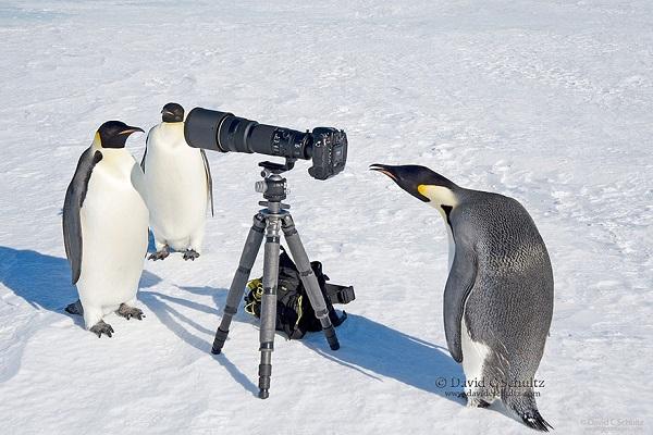 penguen-fotografi-listelist