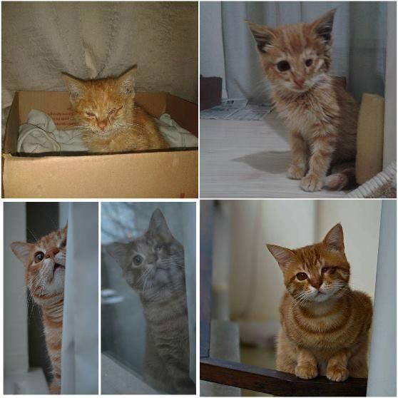 turkiyenin-kedileri-boncuk