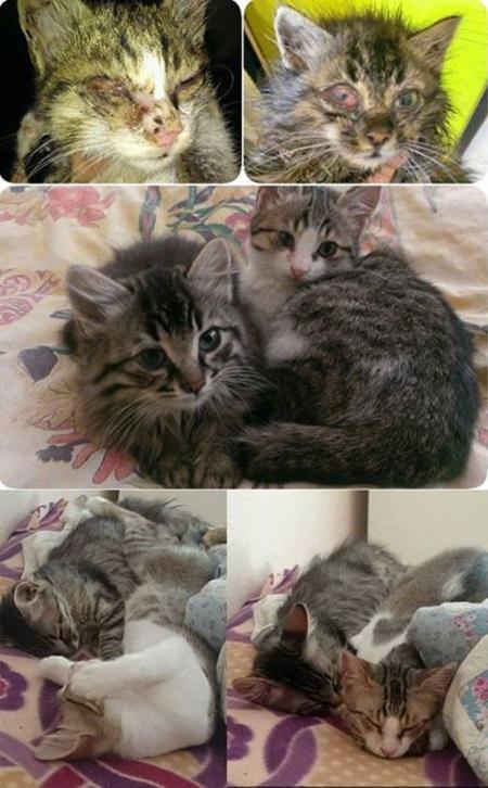 turkiyenin-kedileri-hamsi-marul