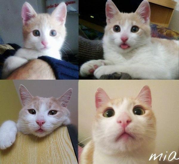 turkiyenin-kedileri-mia
