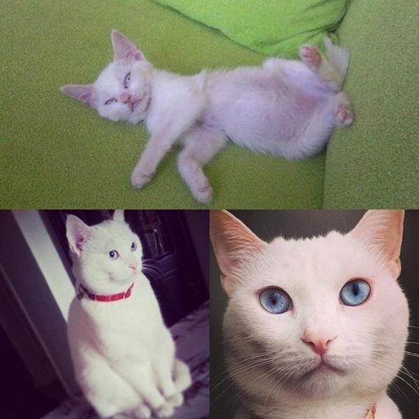 turkiyenin-kedileri-tarcin