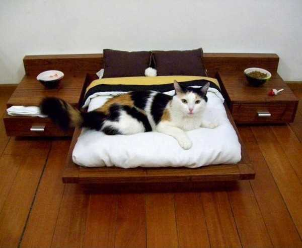 dog-cat-beds-pet-design-ideas-1