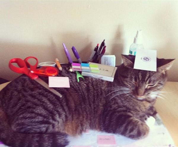 kedi-ofis-masasi
