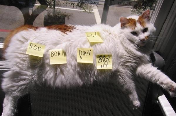 kedi-postit