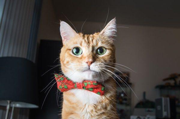kendine-guvenen-kedi