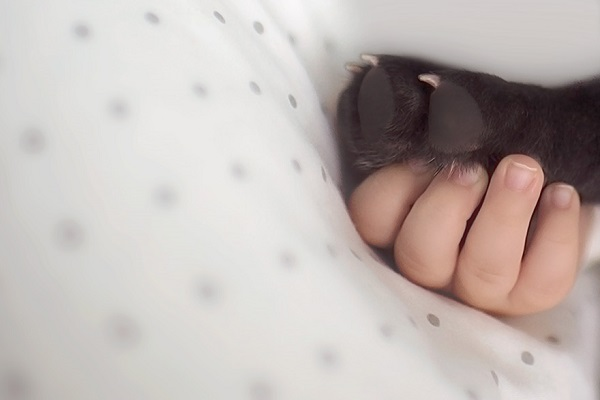 kopek-ve-bebek-listelist