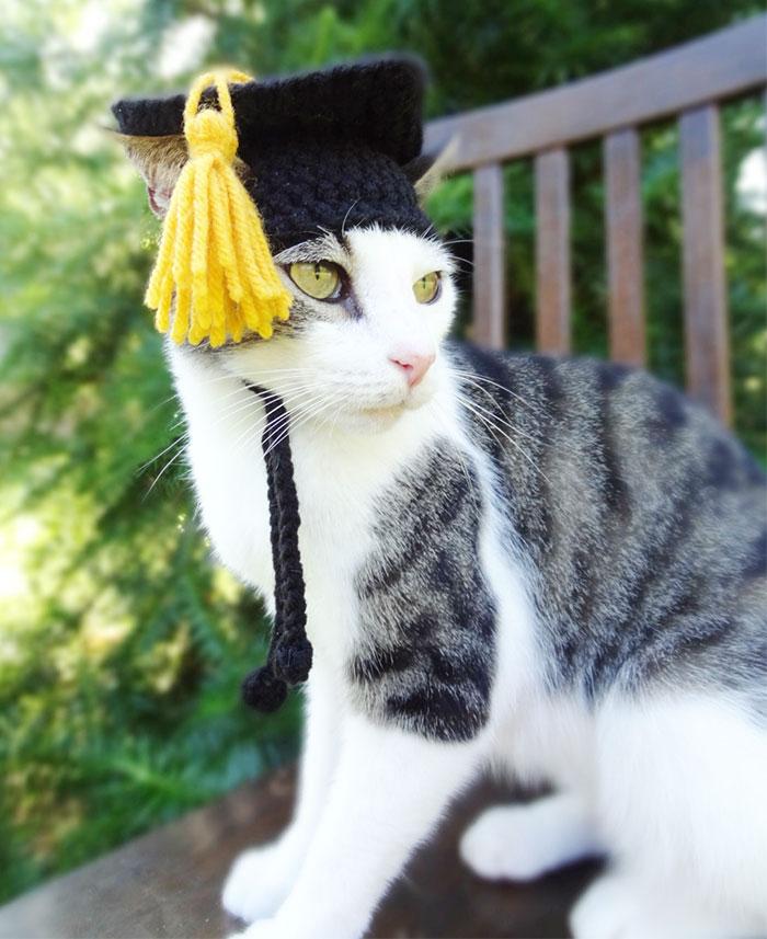 mezuniyet-sapkasi-ile-kedi