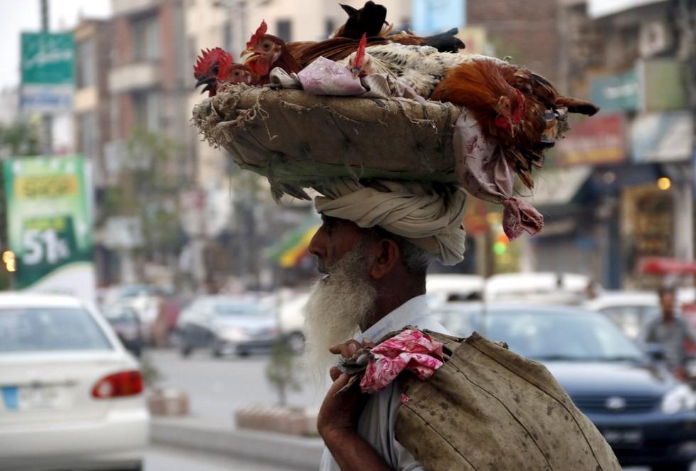 pakistan tavuk