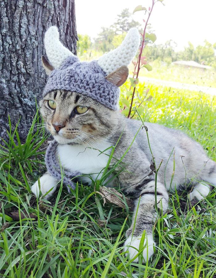 viking-kask-kedi