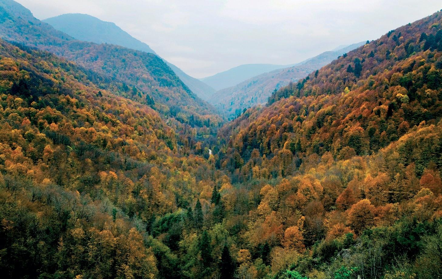 yenice ormanlari