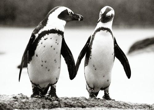6.-Penguins