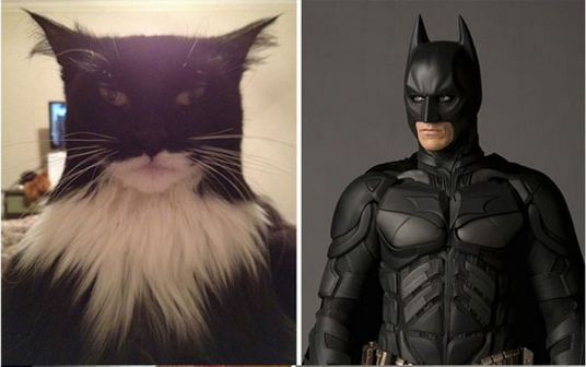 bat-cat-batman-hero