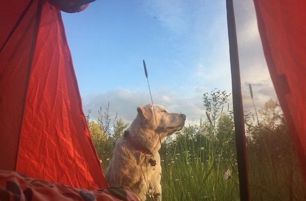 camping kopek ve kadin