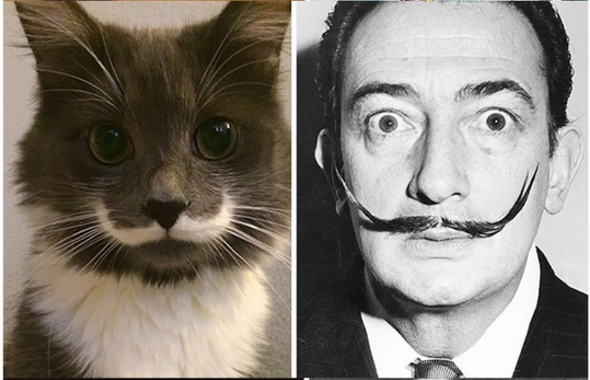 cat-dali-babarti