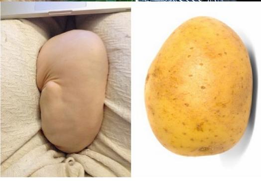 cat-patates-olmus-sanki