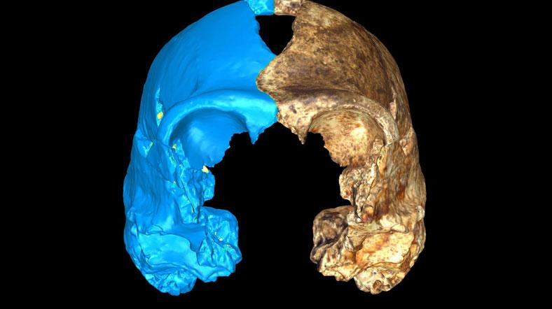 homo-naledi-yarisi-bilgisayar-modeliyle-tamamlanmis-kafatasi