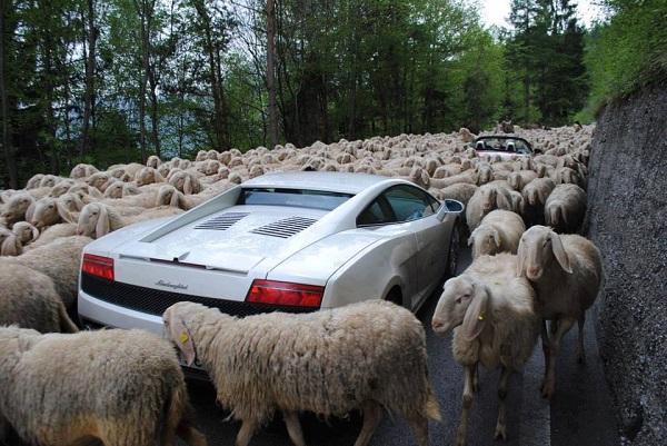isvicre-trafik