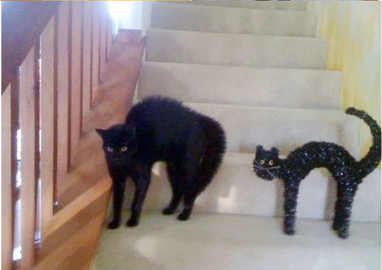 kedi-benziyo-oyuck