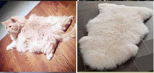 kedi-taklit-yatiyor-esya