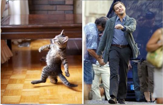 leo-kedi-falan