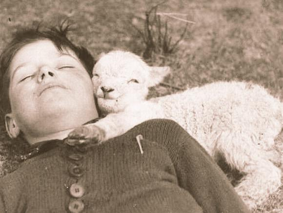 mutluluk-kuzu