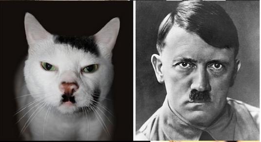 nazi-cat-hitler