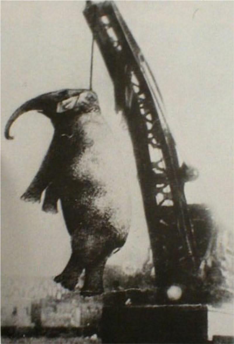 tarihte-idam-edilerek-oldurulen-tek-fil-fil-mary-listelist