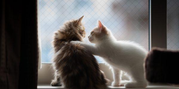 Kitten placing paw on other kitten
