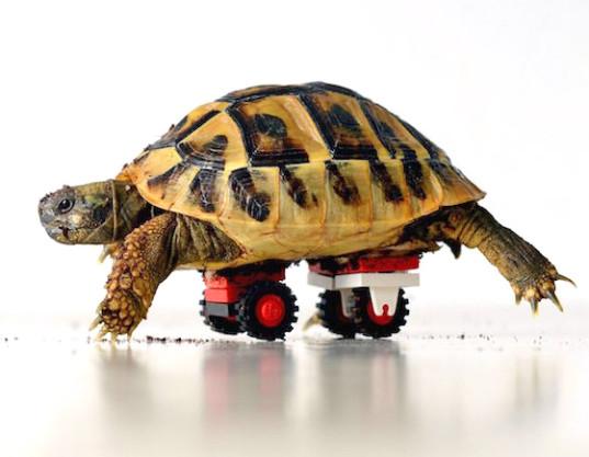 blade-tortoise-lego-wheelchair