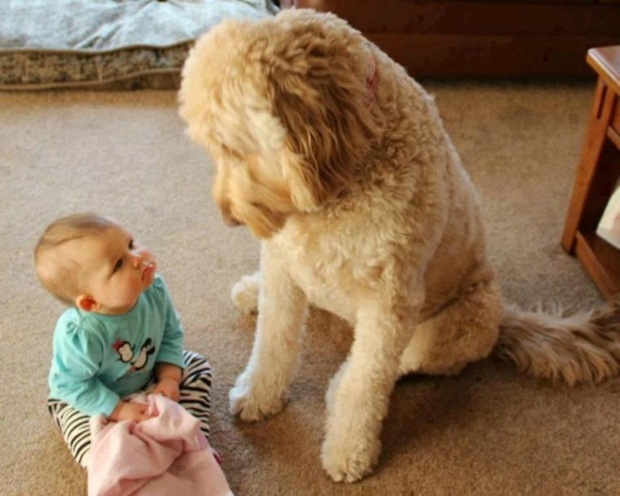kopekler ve bebekler