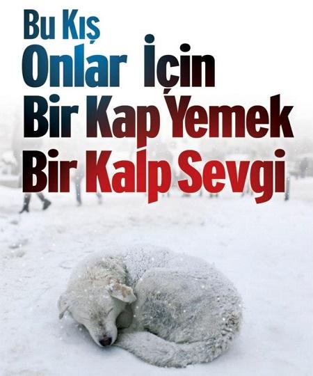 sultanbeyli-sokak-hayvanlarini-unutmadi41567ae6c9c986539265