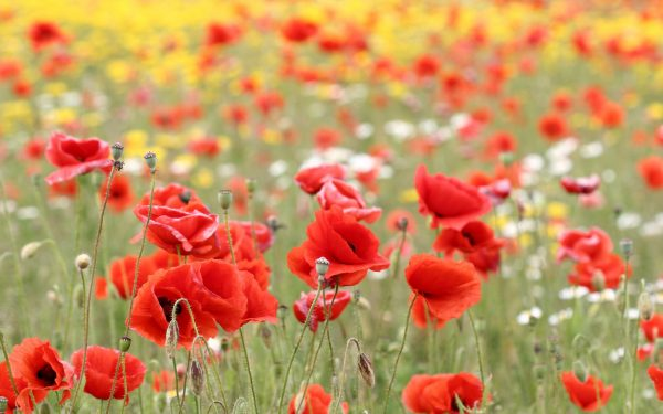 5. Dünyanın bütün çiçeklerini diyorum
