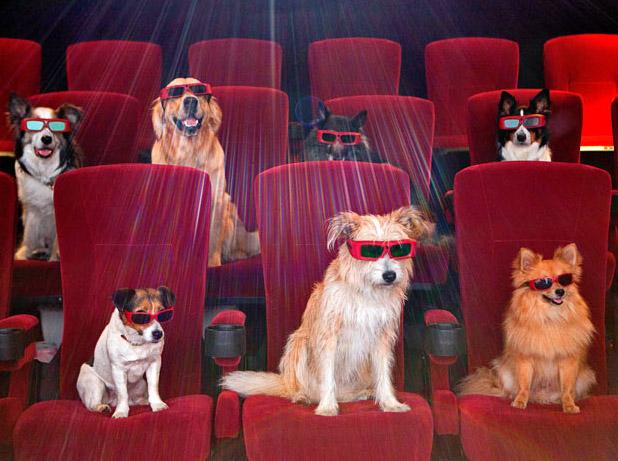 animals-dogs-movies