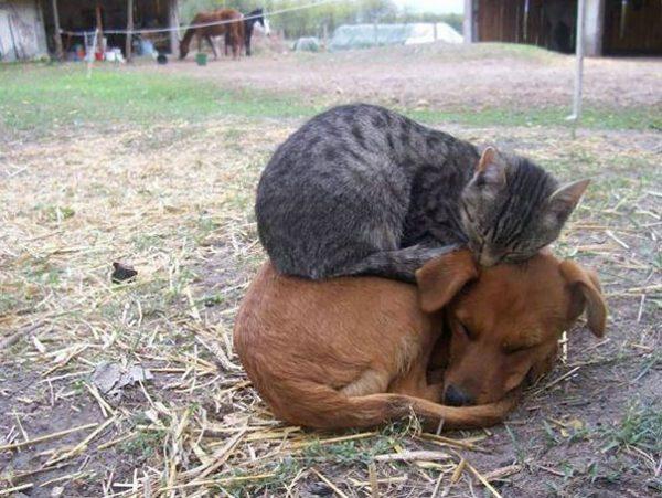 animals-love-warmth-13__605