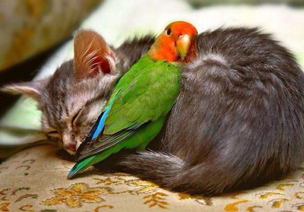 animals-love-warmth-20__605