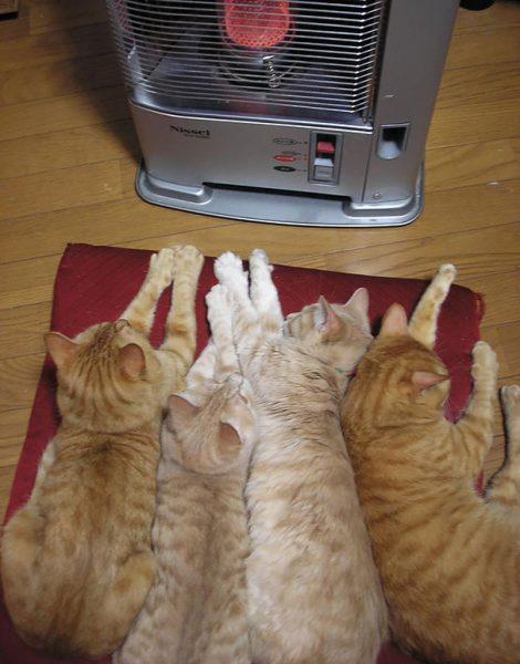 animals-love-warmth-7__605