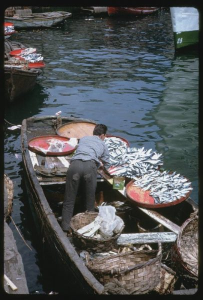 boats-were-filled-with-fish