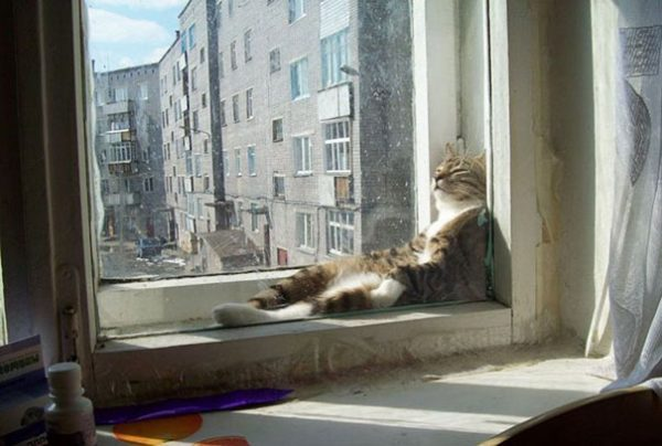 cat-who-loves-warmth-2__605