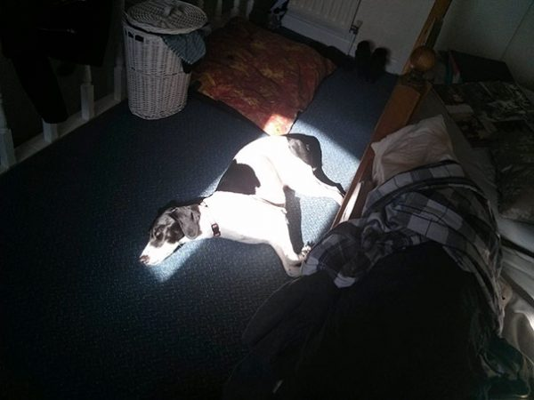 dog-who-loves-warmth-1__605